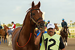 HALLANDALE BEACH, FL  JANUARY 27: Giant Expectations heads to the saddling paddock before the running of theColl Pegasus World Cup Invitational, at Gulfstream Park Race Track on January 27, 2018, in Hallandale Beach, Florida. (Photo by Casey Phillips/ Eclipse Sportswire/ Getty Images)