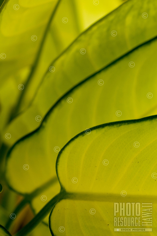 Varied green hues of plant leaves