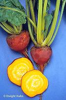 HS62-023x  Beet - golden beet - Golden variety