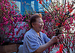 Chinese New Year Flower Festival -- February 14, 2015