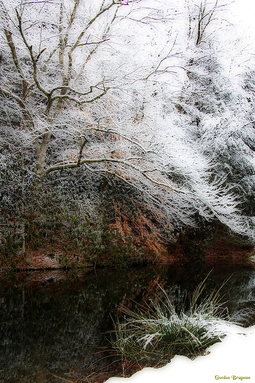 Ortonized image of snow gracing the trees beside a small pond in the Glades area of Gatlinburg, Tennessee. Smoky Mountain photos by Gordon and Jan Brugman.
