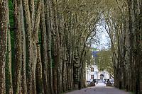 France, Indre-et-Loire (37), Chenonceaux, château et jardins de Chenonceau, grande allée bordée de platanes