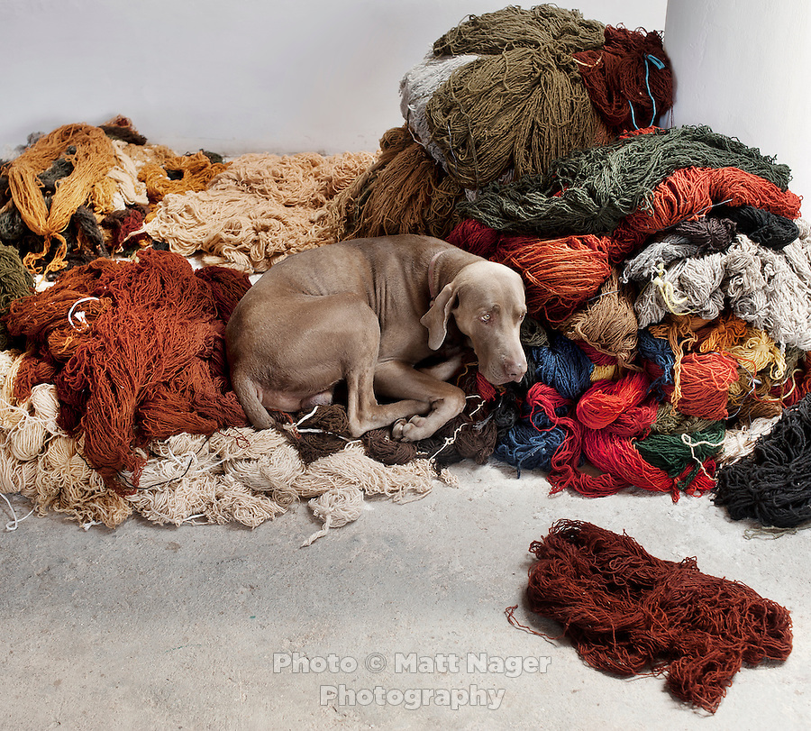 A dog rests on piles of un-used yarn waiting to be used in carpet weavings at a whole sale weaving store in Teotitlan del Valle near Oaxaca, Mexico...Photo by Matt Nager