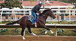 DEL MAR, CA - OCTOBER 02: Hollywood Star, owned by Albaugh Family Stables and trained by Dale L. Romans, exercises in preparation for Sentient Jet Breeders' Cup Juvenile at Del Mar Thoroughbred Club on November 2, 2017 in Del Mar, California. (Photo by Anna Purdy/Eclipse Sportswire/Breeders Cup)