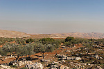 Samaria, Olive groves in Yanun, the Jordan valley in the background