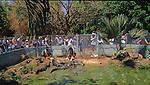 Ferme d'élevage de crocodiles (crocodylus porosus), les males sauvages les plus dangereux sont  capturés et parqués dans les fermes. ils sont nourris.de poulets.Crocodiles Territoire du Nord  Darwin australie