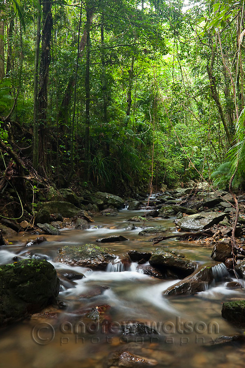 Rainforest creek at Crystal Cascades - a popular freshwater swimming hole near Cairns, Queensland, Australia