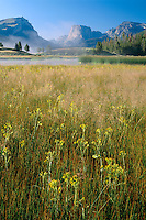 Marsh butterweed and Squaretop Mountain<br />