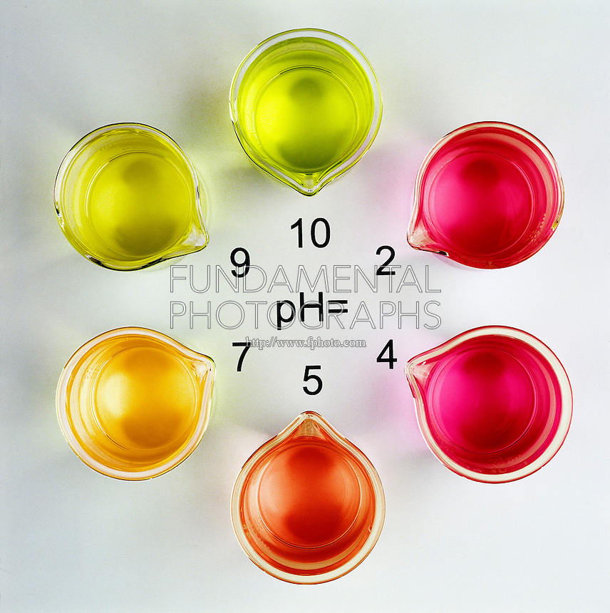 pH INDICATOR:<br /> Range Of Methyl Red (1 of 3)<br /> Buffered solutions are used to demonstrate the color range of methyl red.  Indicator is pink in more acidic solutions (pH 1-5) and yellow in neutral and more basic solutions (pH 7-10).