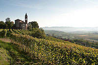 Vineyards of Barolo area of Le Langhe, Piemonte, Italy
