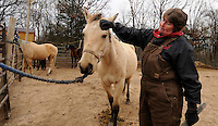 NWA Media/ J.T. Wampler - Susan Sullivan of Fayetteville scratches Jack after she trimmed his hooves Tuesday Dec. 16, 2014 at Flying Q Farms. Hoof trimming needs to be done every six to eight weeks according to Sullivan.