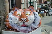 Tiger face in pumpkins, Damariscotta, Maine