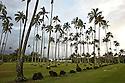 Coconut tree on Kauai in Hawaii.