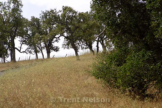 trees, dry grass, trail I used to hike.<br />