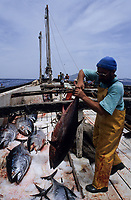 ITALY, Sicily, Egedian island Favignana, La Mattanza, traditional fishing of bluefin Tuna fish, transport of Tuna with ice back to the port