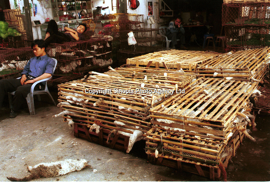 Cats are stored in cages after arriving in bamboo crates at a huge wild animal market that specializes in cat meat. Cats are commonly reared in the Chinese countryside specifically for sale to restaurants, where cat meat is now very popular...PHOTO BY SINOPIX..
