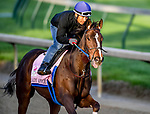 LOUISVILLE, KENTUCKY - APRIL 27: Lady Apple, trained by Steve Asmussen, exercises in preparation for the Kentucky Oaks at Churchill Downs in Louisville, Kentucky on April 27, 2019. John Voorhees/Eclipse Sportswire/CSM