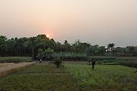 Bangladesh, Jhenaidah. Fields at sunset.