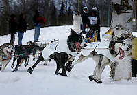 William Kleedehn's team rounds a hairpin turn in Anchorage on Saturday March 1st during the ceremonial start day of the 2008 Iidtarod Sled Dog Race.