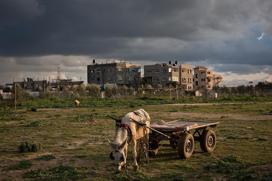 GAZA,Erez: A donkey with a cart used by bedouin sheperds. <br /> <br /> GAZA, Erez: Un &acirc;ne et une charette utilis&eacute;e par les bergers.