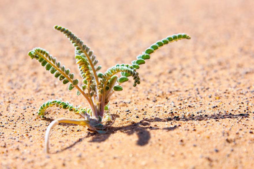 Tiny desert plant in sand.