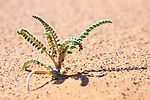 Tiny desert plant in sand.