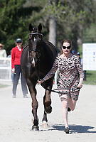 LEXINGTON, KY - April 26, 2017. #51 Cooley Cross Border and Kim Severson from the USA at the Rolex Three Day Event First Horse Inspection at the Kentucky Horse Park.  Lexington, Kentucky. (Photo by Candice Chavez/Eclipse Sportswire/Getty Images)