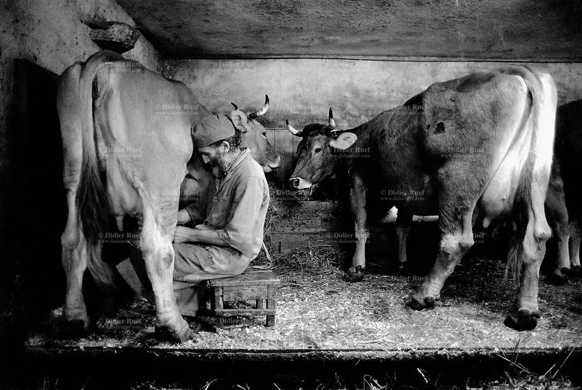 Switzerland. Canton Graubunden. Bondo. Bregaglia valley.  The man is milking the cows. Manual labor. Swiss alpine farmers. Alps mountains peasants. © 1997 Didier Ruef