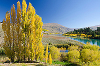Autumn tree and the Kawarau River at Bannockburn near Cromwell, Central Otago, New Zealand - stock photo, canvas, fine art print