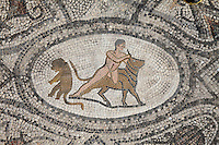 Roman mosaic of Hercules capturing the Cretan bull, his seventh labour, from the Labours of Hercules mosaic in the House of the Labours of Hercules, 1st century AD, Volubilis, Northern Morocco. Volubilis was founded in the 3rd century BC by the Phoenicians and was a Roman settlement from the 1st century AD. Volubilis was a thriving Roman olive growing town until 280 AD and was settled until the 11th century. The buildings were largely destroyed by an earthquake in the 18th century and have since been excavated and partly restored. Volubilis was listed as a UNESCO World Heritage Site in 1997. Picture by Manuel Cohen