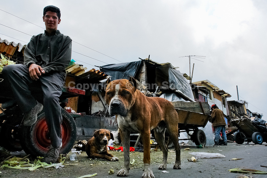 A Colombian boy with his pitbulls dogs hangs out in the 'Invasión', a temporary slum in Bogota, Colombia, 1 April 2006. The internal armed conflict in Colombia together with lack of social network caused appearence of small invasion slums in all Colombian urban zones in last years. These illegal settlements rise quickly in free uncontrolled spaces between industrial buildings, both in the city centres and peripheries. Shacks do not have sanitation network, neither electricity. Most of their inhabitants are war fugitives violently displaced from their original lands in the country by guerrilla or paramilitary forces. Picking up the rubbish and recycling it is a common survive strategy for people living in these temporal ghettos until those are not dismantled by city administration.
