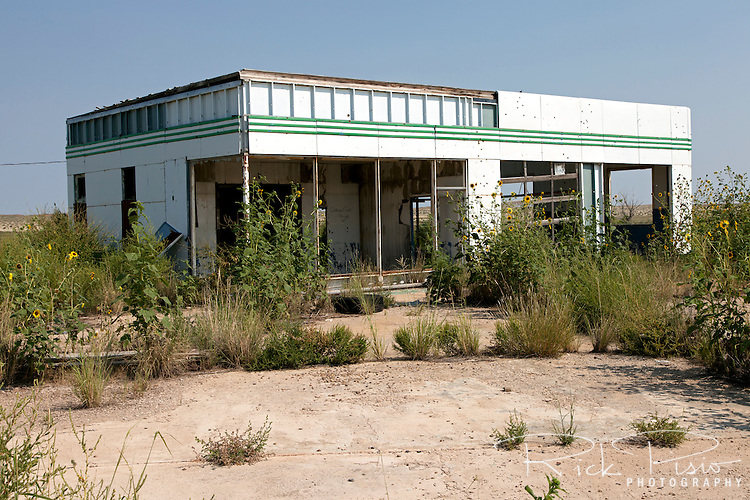 Wild Sunflowers now grow at an abandoned gas station that once catered to Route 66 traffic and now sits off the Interstate at the exit for Glenrio in Texas.