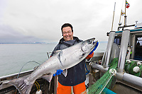 Commercial fisherman Bill Webber holds a King Salmon caught in his gill net during a 12 hour sockeye and king salmon opener on the Copper River Delta, southcentral, Alaska.