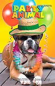 Samantha, ANIMALS,  photos,+dogs,++++,AUKPLP077A,#A# Humor, lustig, divertido