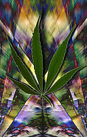 Disagio sociale.Social disease.Uso di Marijuana. Use of Marijuana......