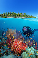 A tropical coral reef provides shelter for many animals, Fiji, Indo-Pacific (dc)