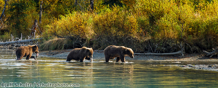 Fall landscape of grizzly bears walking at Crescent Lake, Lake Clark National Park, Alaska.<br /> <br /> Photo by Jeff Schultz/SchultzPhoto.com  (C) 2018  ALL RIGHTS RESERVED<br /> <br /> 2018 Bears, Glaciers and Fall Colors Photo tour/workshop