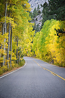 A section of Highway 158, also known as the June Lake Loop, adorned in the autumn color