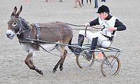 28.6.14 Donkey Chariot