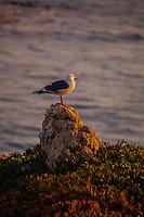 You Malibu Bird