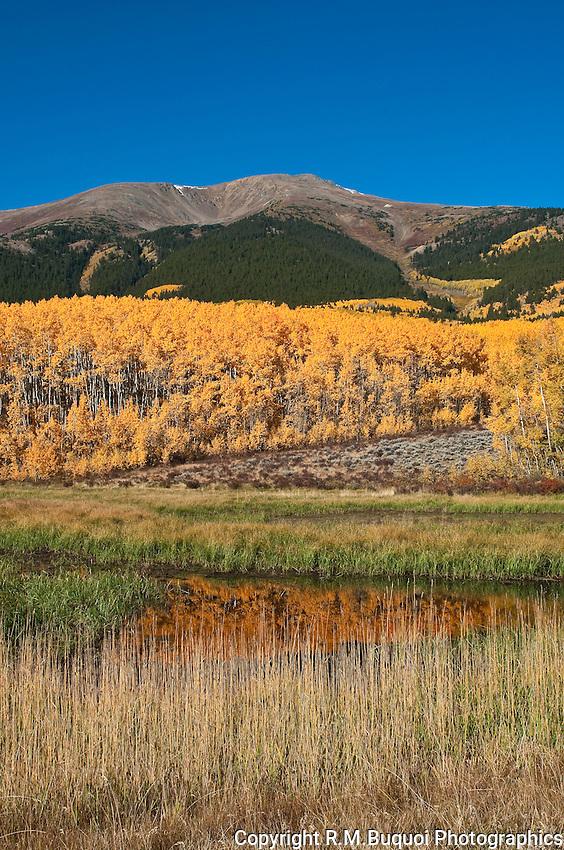 Aspen Grove near Twin Lakes, Colorado