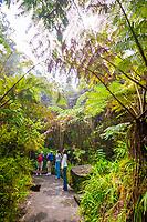 woman tourists, hiking rainforest trail, Hawaii Volcanoes National Park, Kilauea, Big Island, Hawaii, USA, MR