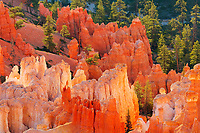 hoodoos, Inspiration Point, at sunrise, Bryce Canyon National Park, Utah, USA