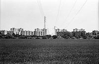 Parco agricolo Sud Milano presso il quartiere Gratosoglio. Risaia --- Rural Park South Milan near Gratosoglio district. Rice field