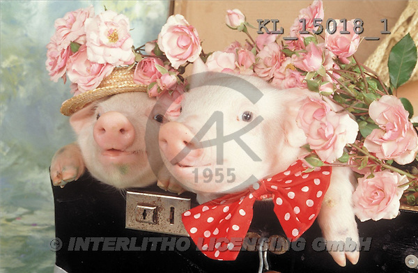 Interlitho, Alberto, ANIMALS, pigs, photos, 2 pigs, suitcase(KL15018/1,#A#) Schweine, cerdos