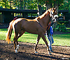 Wall Street Watch in the paddock at Delaware Park on 10/8/15
