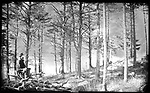 Frederick Stone negative. High Rock Grove. <br />