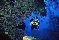 Female Scuba Diver exploring the North Wall of Grand Cayman Island, BWI.