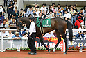 Horse Racing: Mermaid Stakes at Hanshin Racecourse