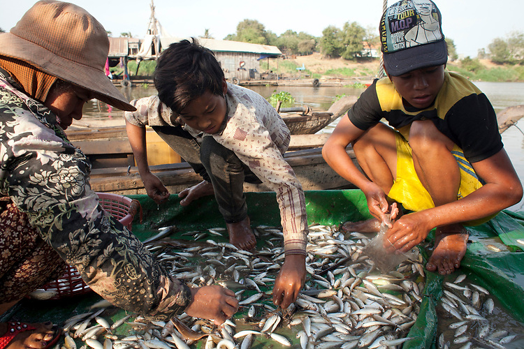 Fisherman sort through a meager catch on the Mekong River early in the morning outside of Phnom Penh, Cambodia. <br /> <br /> Photos &copy; Dennis Drenner 2013.
